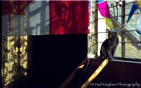Cat in Window - Paul Maybee