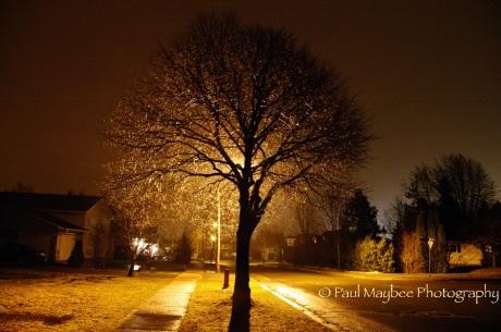 Nottingham St. Tree at night