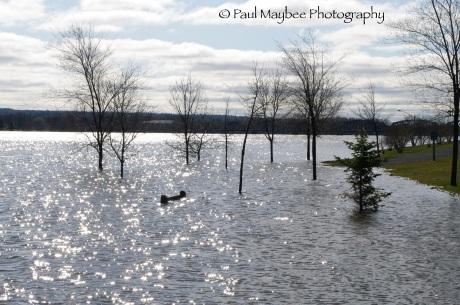 Fredericton Flood - park