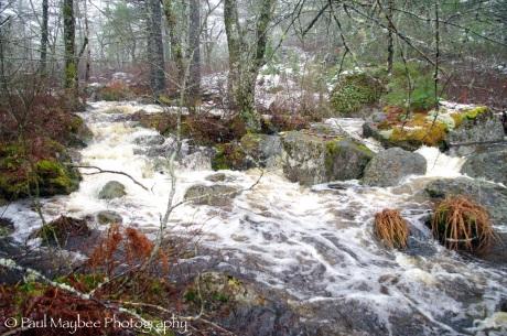 House Lake Stream
