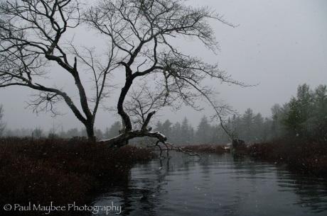 House Lake stillwater