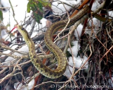 Snake Sunning
