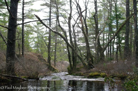 Stream to Halfmoon Lake