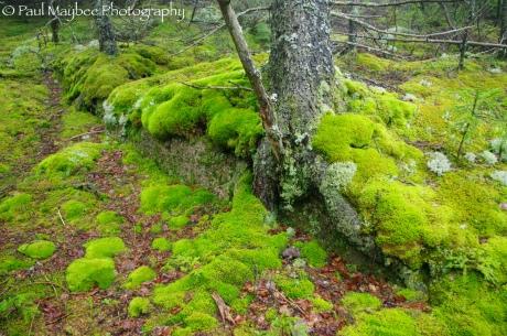 Moss Understory