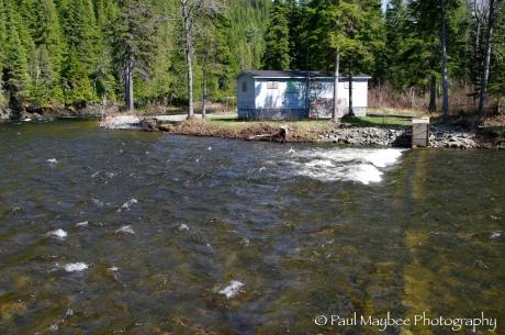 Fish Retention Barrier