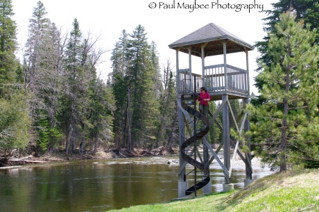 Trout Spotting Tower