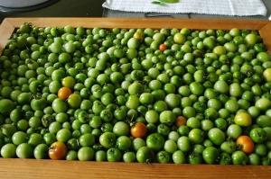 Tomato tray...